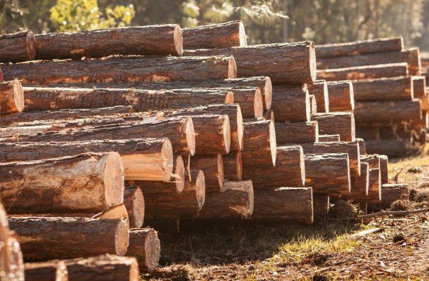Let's stop logging for landfill - Openforum - Openforum